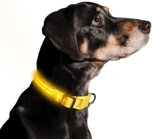 Illumiseen LED Dog Collar For Small Dogs