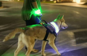 Best LED Dog Collars, Harness and Leash