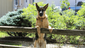 How to Stop a Dog From Jumping the Fence