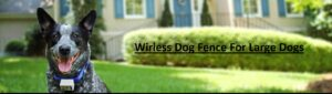 wireless fence for large dogs