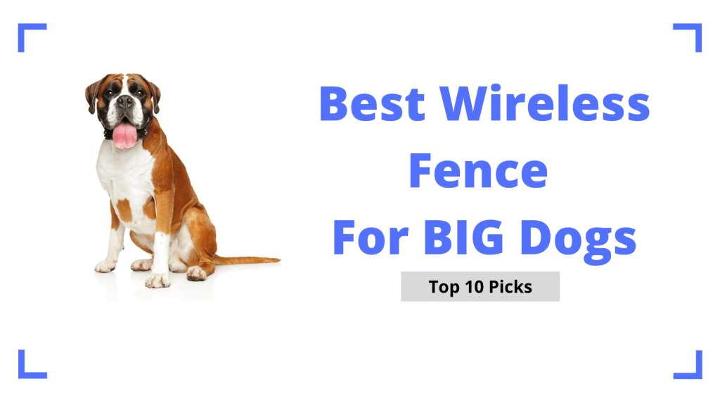 Best Wireless Fence For Large Dogs