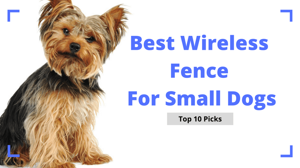 Best Wireless Fence For Small Dogs