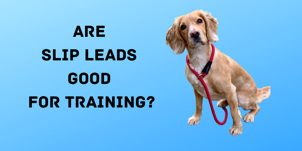 Are Slip Leads Good For Training?