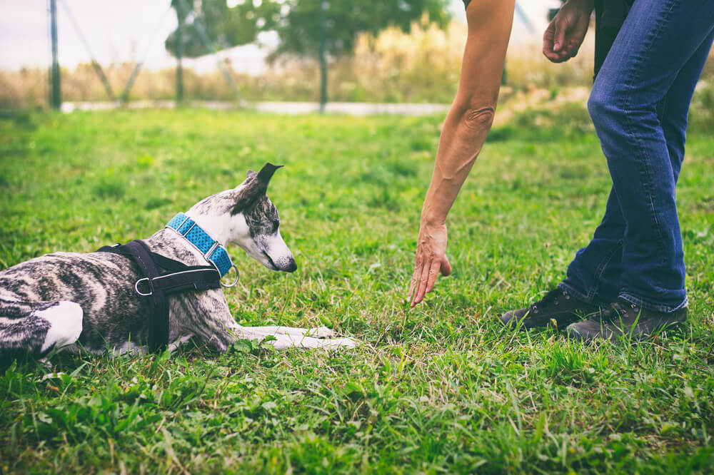 How to Train Dog with Remote Collar?