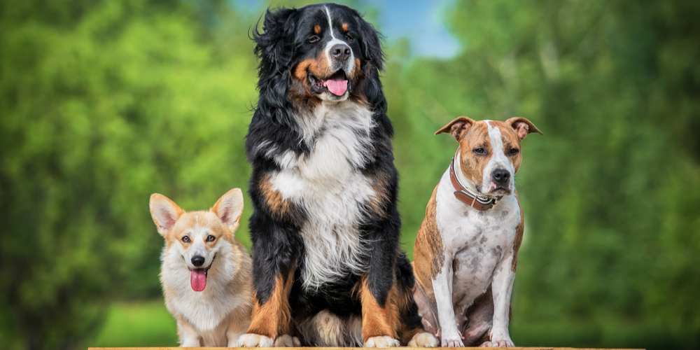 Most Difficult Dog Breeds to Train
